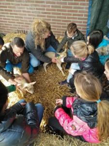 Lammetjes aaien